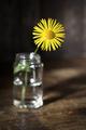 Summer Flower - PhotoDune Item for Sale