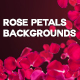 4 Rose Petals Backgrounds with Editable Text - GraphicRiver Item for Sale