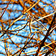 Moving Tree Branches - VideoHive Item for Sale