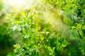green fresh foliage - PhotoDune Item for Sale