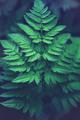 fern leaf full screen - PhotoDune Item for Sale