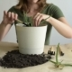 Woman Planting a Sprout of Aloe Vera - VideoHive Item for Sale