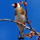 Bird Song 1