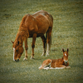 A mother horse and a foal relaxing in a grass - PhotoDune Item for Sale
