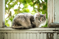 Gray Cat sitting on a balcony with summer sunlight - PhotoDune Item for Sale
