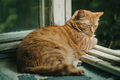 Ginger cat relaxing on a balcony - PhotoDune Item for Sale