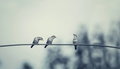 Three birds on wire, one of the bird has a food - PhotoDune Item for Sale