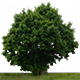 Trees PNG - 3DOcean Item for Sale