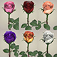 Rose Flower Collection - 3DOcean Item for Sale