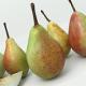 Pear fruit - 3DOcean Item for Sale