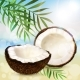 Coco and Palm Leaves - GraphicRiver Item for Sale