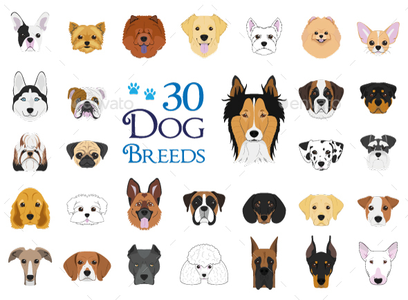 30 Dog Breeds Vector Collection