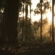 Sun Reflects in the Morning Pine Forest, Romantic Sunset, Lovely Sunrise - VideoHive Item for Sale