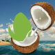 Logo Reveal Nature Coconut - VideoHive Item for Sale
