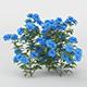 Blue Daisies Flower Bush - 3DOcean Item for Sale