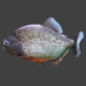 Piranha - 3DOcean Item for Sale