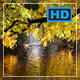 Tree Crown Broad Foliage Hangs over a Calm River - VideoHive Item for Sale