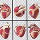 Human Heart Animated Pack - VideoHive Item for Sale