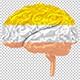 Brains in Golden, Silver, Bronze  - VideoHive Item for Sale