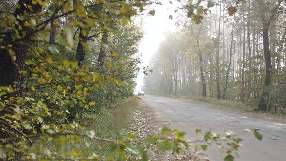Car Drives Along the Forest Road