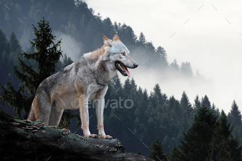 Wolf hunting in mountain