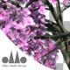 3D Animated Photorealistic Sakura Tree Ver.1 - Pink - VideoHive Item for Sale