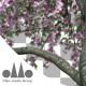 Photorealistic Sakura Tree Ver.3.2 - Pink & Green - VideoHive Item for Sale