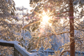 Sun shining through snowy trees - PhotoDune Item for Sale