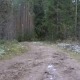 Video of Frozen Dirty Trail in the Forest - VideoHive Item for Sale