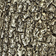 10 Bark Texture Pack - 3DOcean Item for Sale