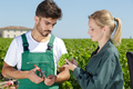 young couple looking at grapes in the grape fields - PhotoDune Item for Sale