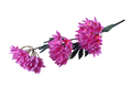 Artificial Summer Flower Isolated - PhotoDune Item for Sale