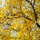 Late Autumn Leaves Branch - VideoHive Item for Sale