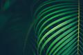 Palm leaf background - PhotoDune Item for Sale