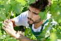 man in vineyard - PhotoDune Item for Sale