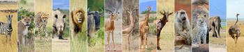 Collage of african wildlife animal