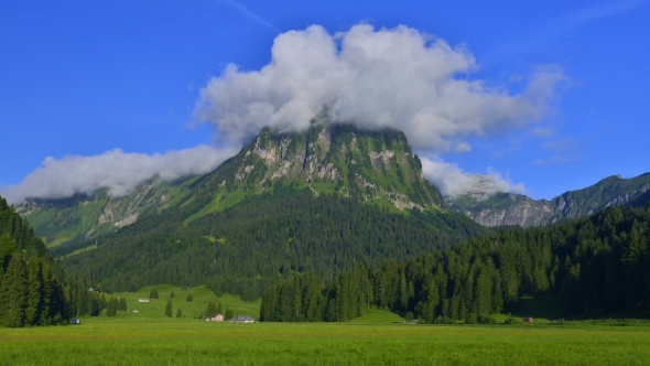 Amazing  on the Fantastic Swiss Meadow