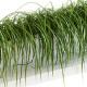 Grass on the shelves of 13 models - 3DOcean Item for Sale