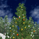 Christmas Tree With  Moon - VideoHive Item for Sale