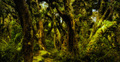 A moody view of forest in New Zealand - PhotoDune Item for Sale
