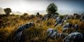 Granite rocks in the fog, New Zealand - PhotoDune Item for Sale