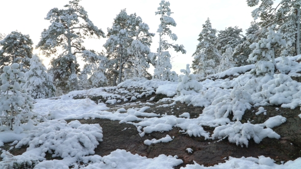 Forest in Snow in Finland