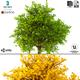 Bush 3d Model No 2 (3 Seasons) - 3DOcean Item for Sale