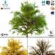 Bush 3d Model No 1 (3 Seasons) - 3DOcean Item for Sale