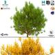 Bush 3d Model No 3 (3 Seasons) - 3DOcean Item for Sale