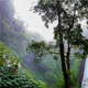 Jungle Ambience - AudioJungle Item for Sale
