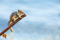 Eastern Chipmunk - Tamias striatus, climbing a branch.   - PhotoDune Item for Sale