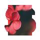 Spring - Two Column Portfolio Tumblr Theme - ThemeForest Item for Sale