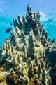 Rare Pillar Corals in the Caribbean Sea - PhotoDune Item for Sale