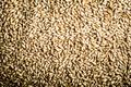 Pilsner Malt Beer Grain Texture - PhotoDune Item for Sale